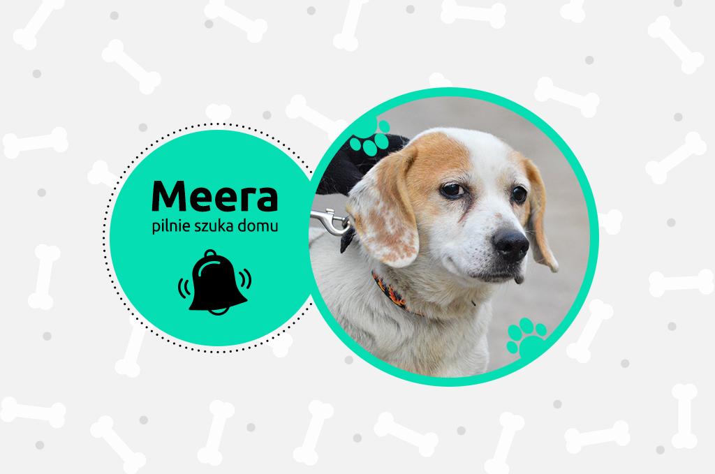 Meera – pilnie szuka domu!